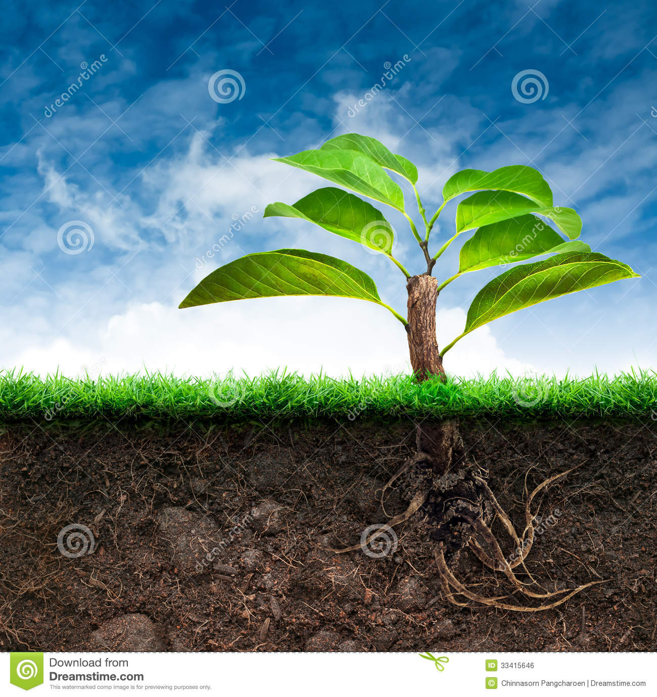 Origin tree and soil with grass in blue sky royalty free for Soil and its origin