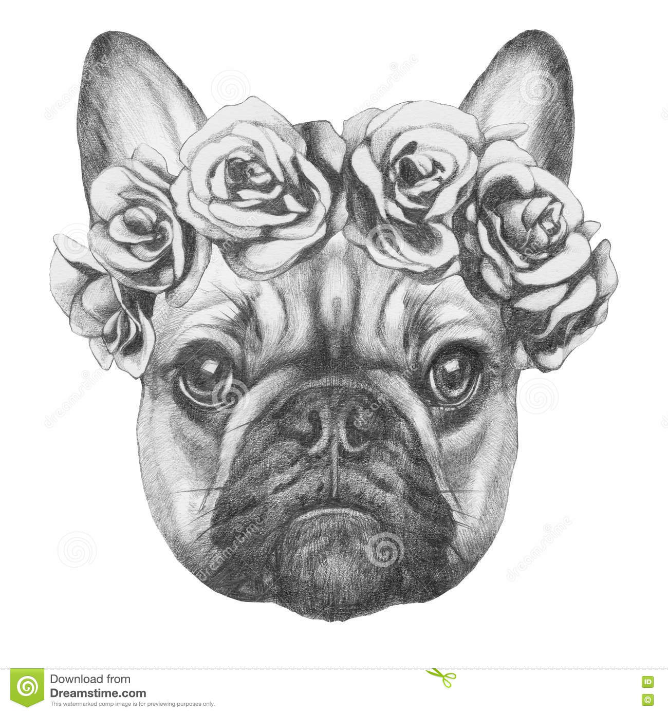 Original Drawing Of French Bulldog With Roses Stock