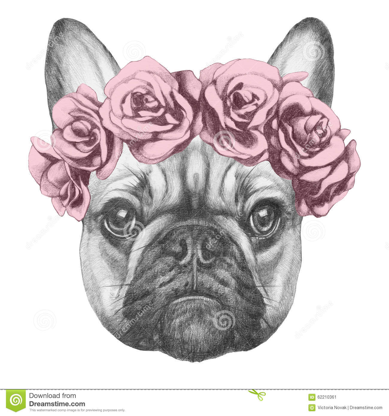 Original Drawing Of French Bulldog With Roses. Stock ...