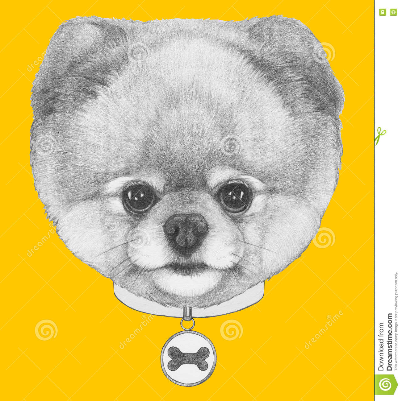 original drawing of pomeranian dog with collar