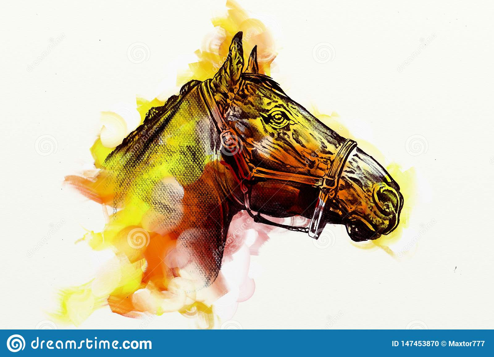 Original Oil Painting Of A Fine Arabian Horse Funny Artwork Stock Illustration Illustration Of Stallion Black 147453870