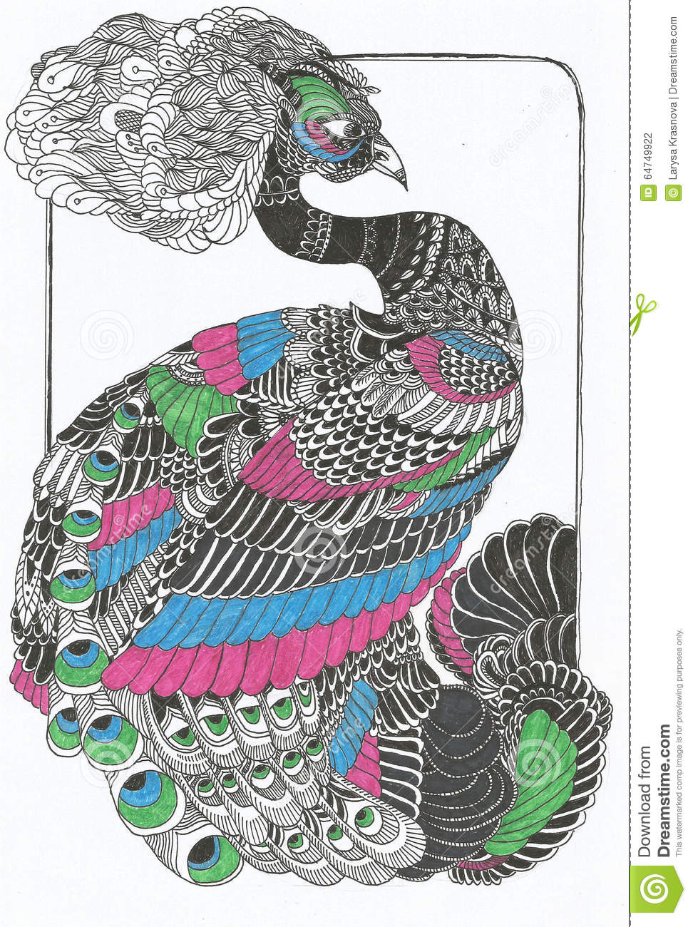 Line Drawing Of Peacock : Original peacock line art drawing stock illustration