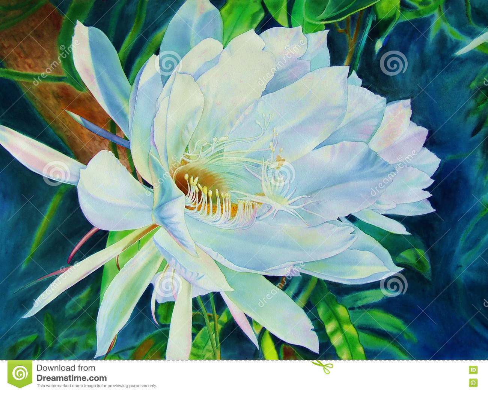 Original Realistic Painting Flowers Bloom At Night Peony Flower Stock Illu