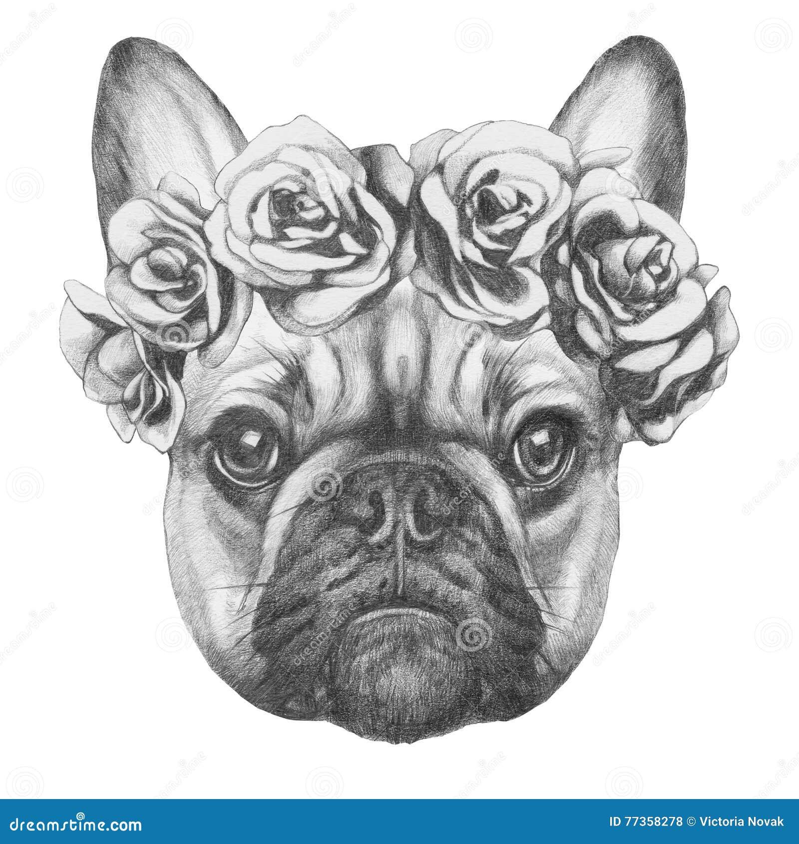 Original- teckning av den franska bulldoggen med rosor