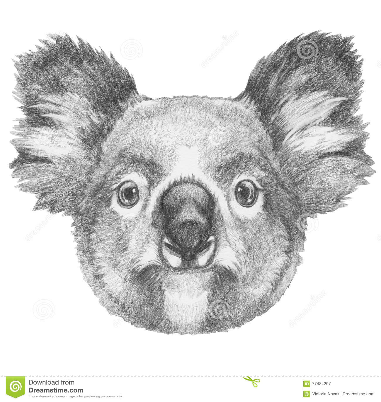 Original- teckning av koalan