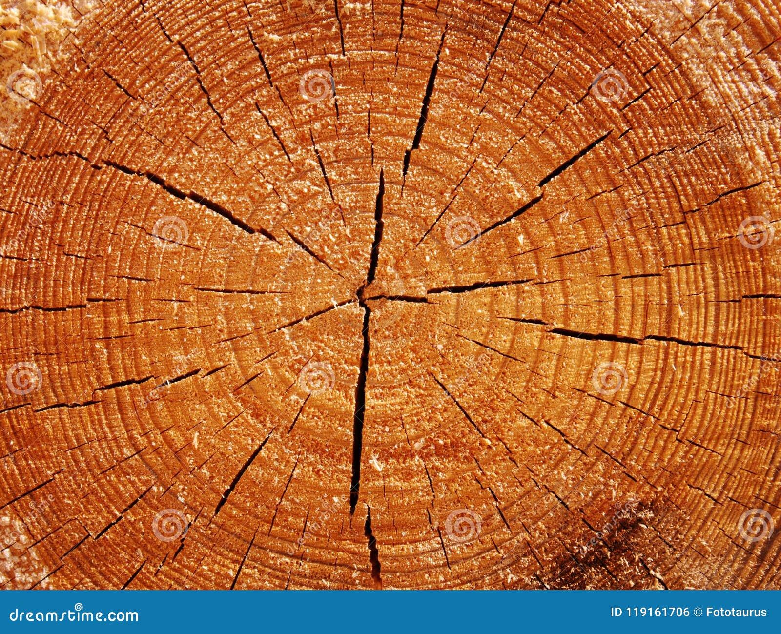 Original wood texture on the cut