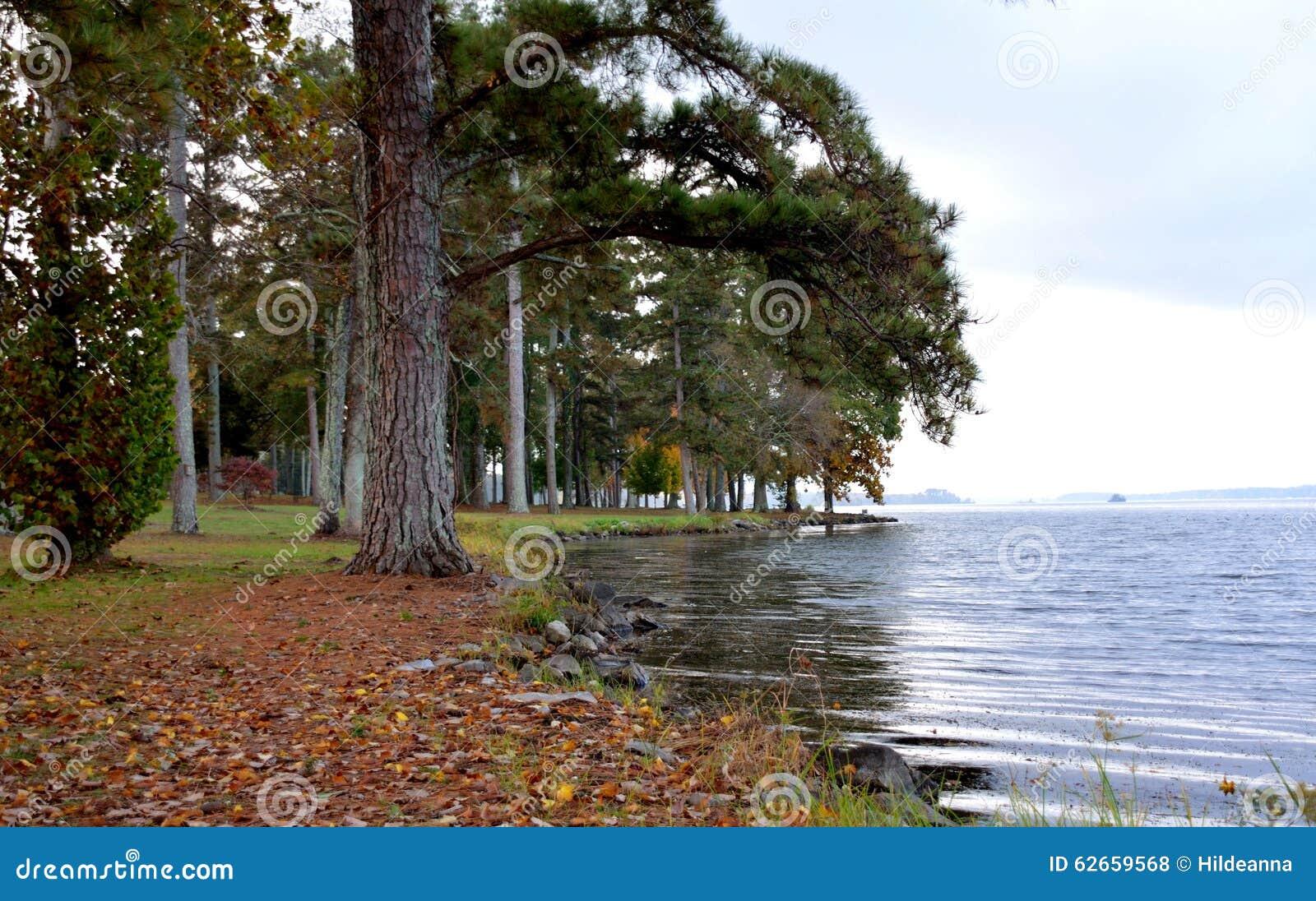 Orilla del lago en un parque