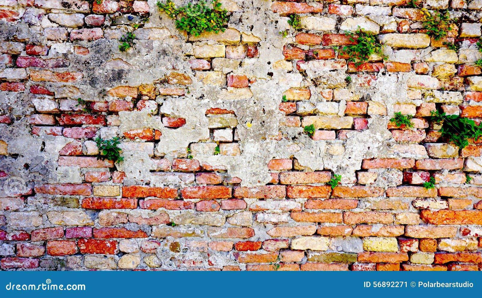 Orizzontale del muro di mattoni e della pianta di decadimento in Burano