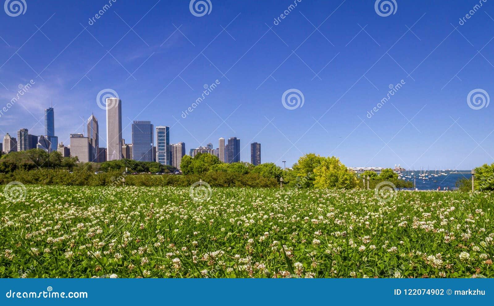 Orizzonte di Chicago sopra il campo dei fiori