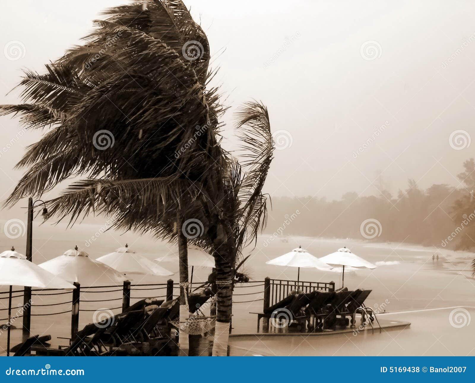 Orkaan, toevlucht, palmen