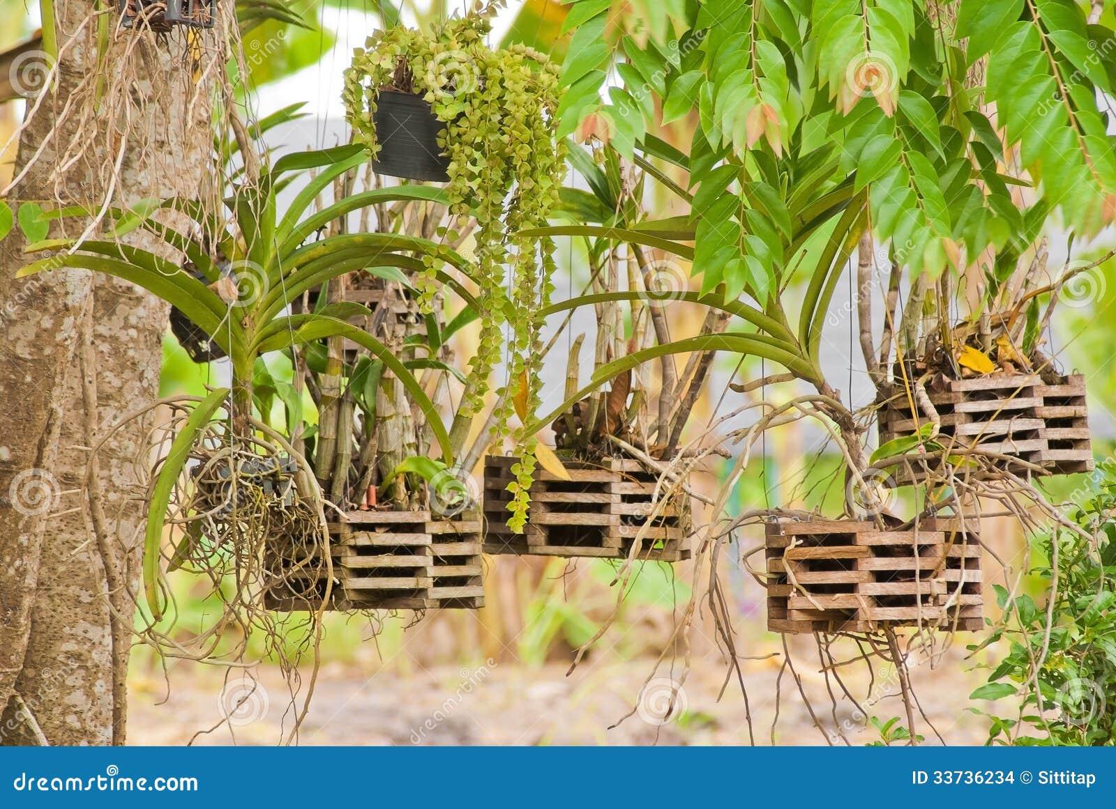 Orkidéträdgård