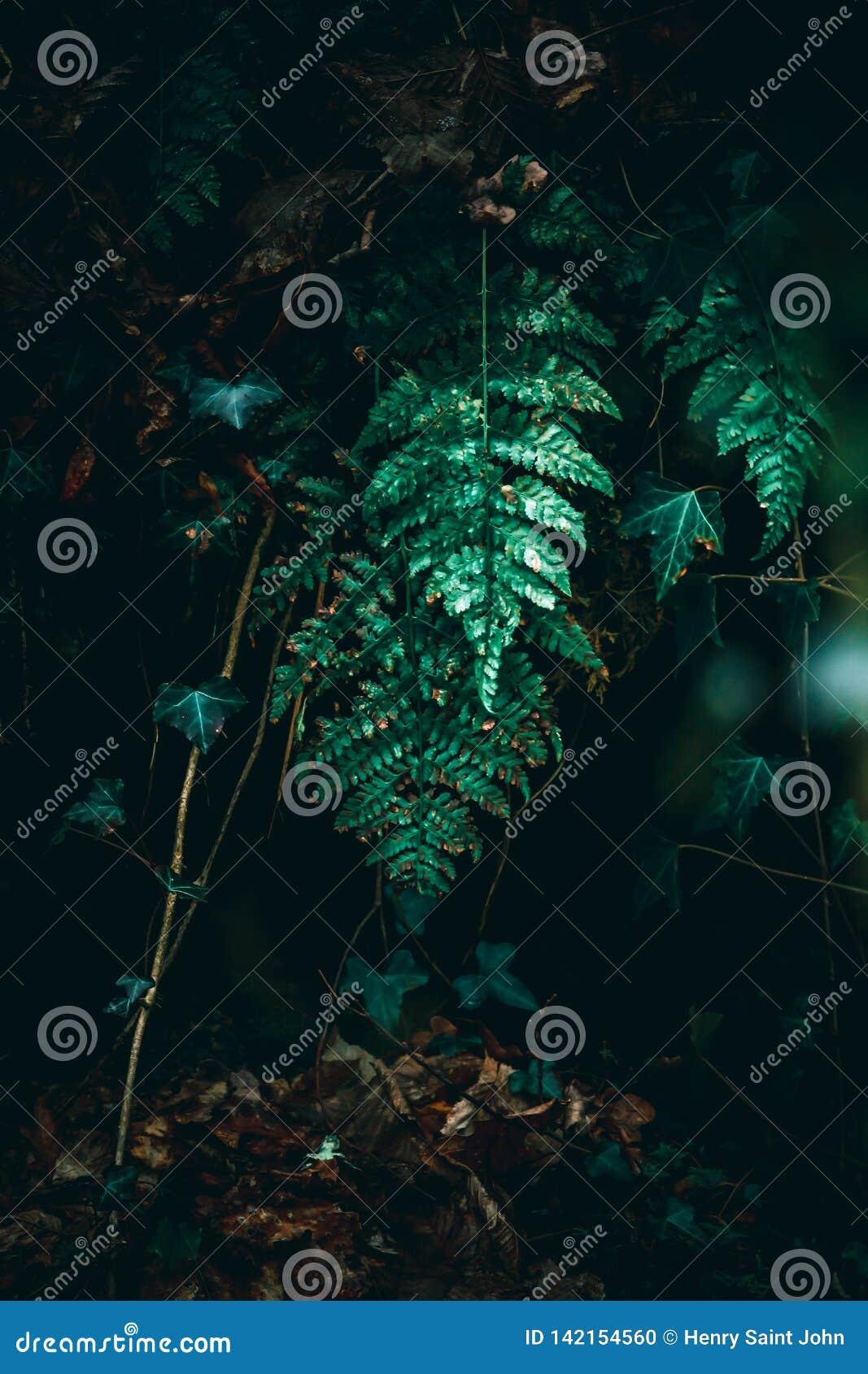 Ormbunke i ljus i skog