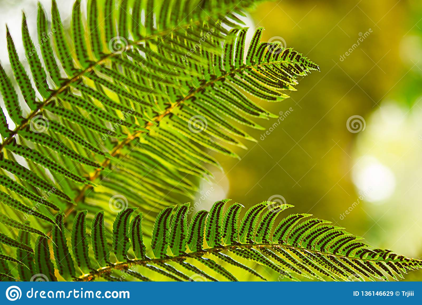 Ormbunkeormbunksblad som framme växer av ljust - klartecken
