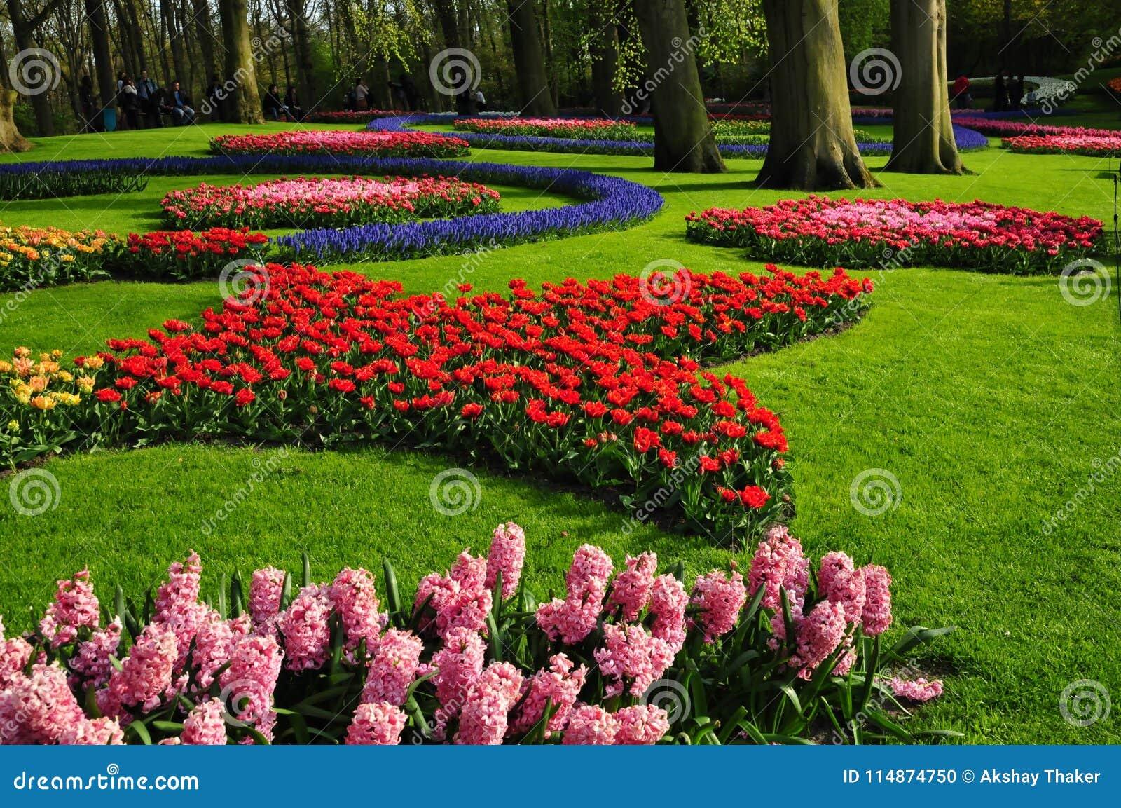 Keukenhof garden the worlds largest flower gardens situated in the worlds largest flower gardens situated in lisse netherlands izmirmasajfo