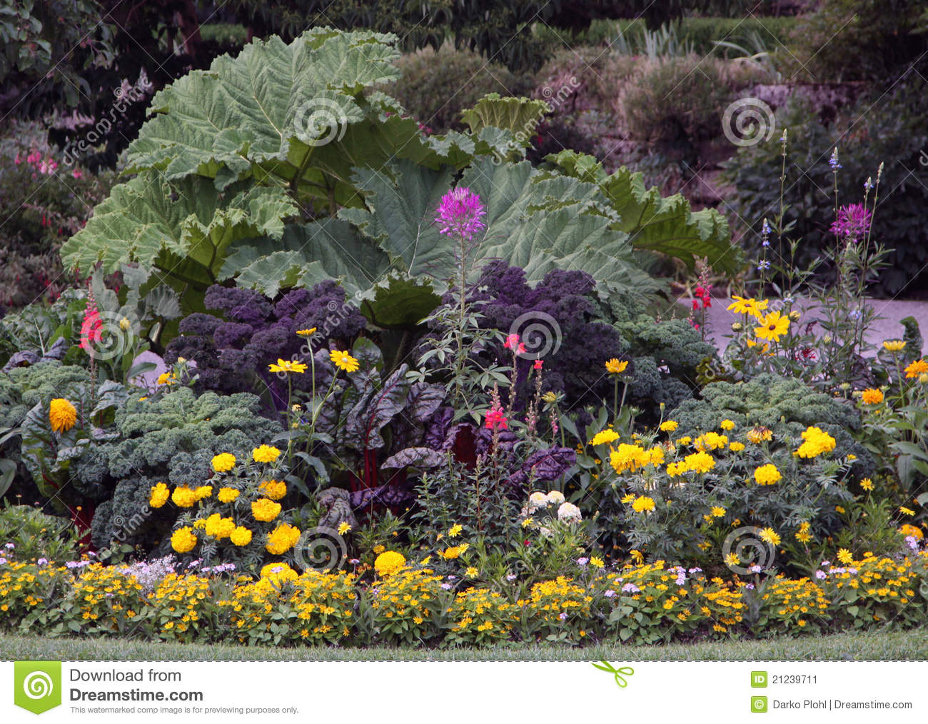Ornamental flowers garden bed stock image image 21239711 for Ornamental garden plants