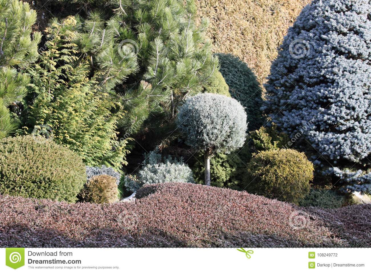 Garden Borders With Conifers And Cover Plants Stock Photo Image