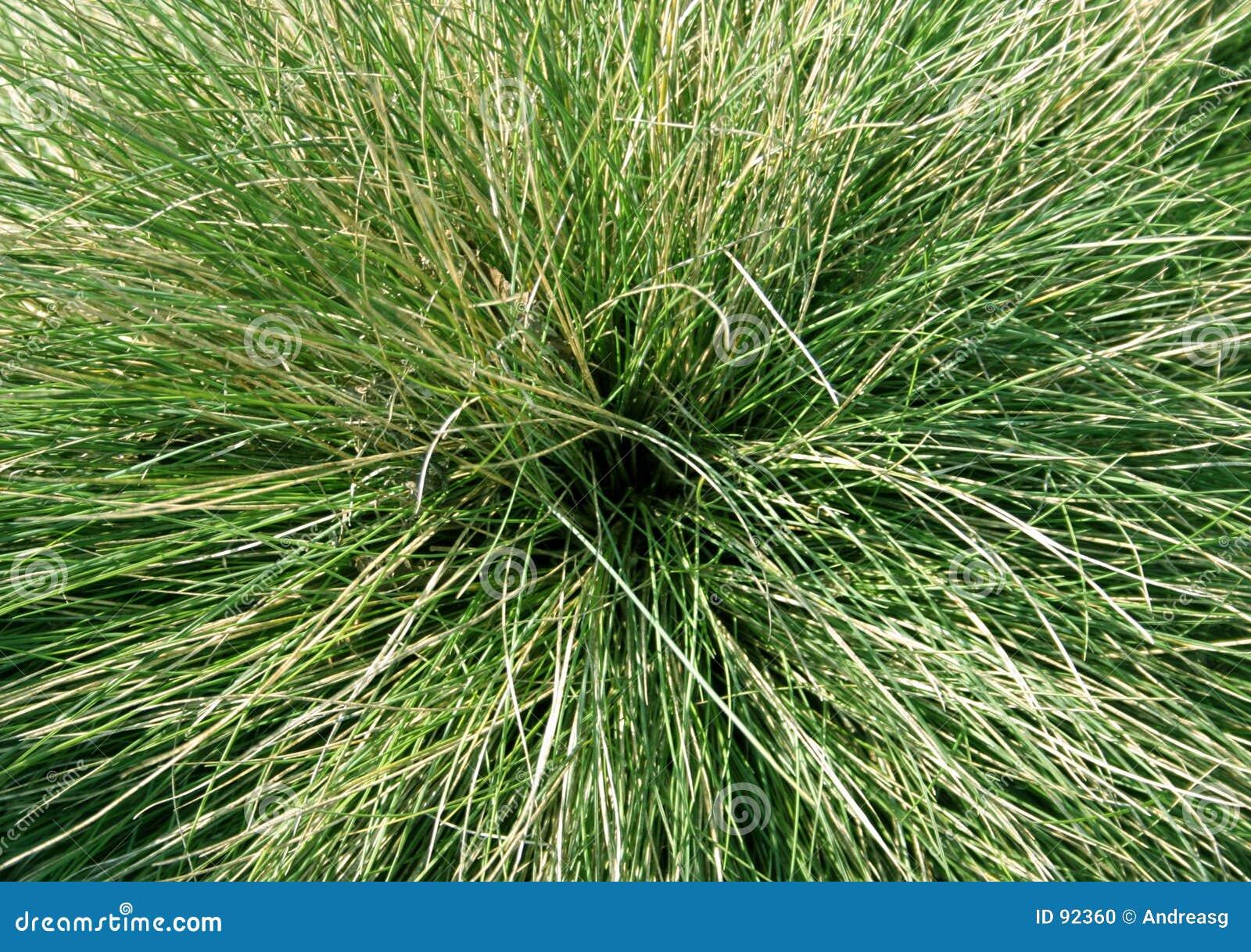 Ornamental grass stock photo image 92360 for Green ornamental grass