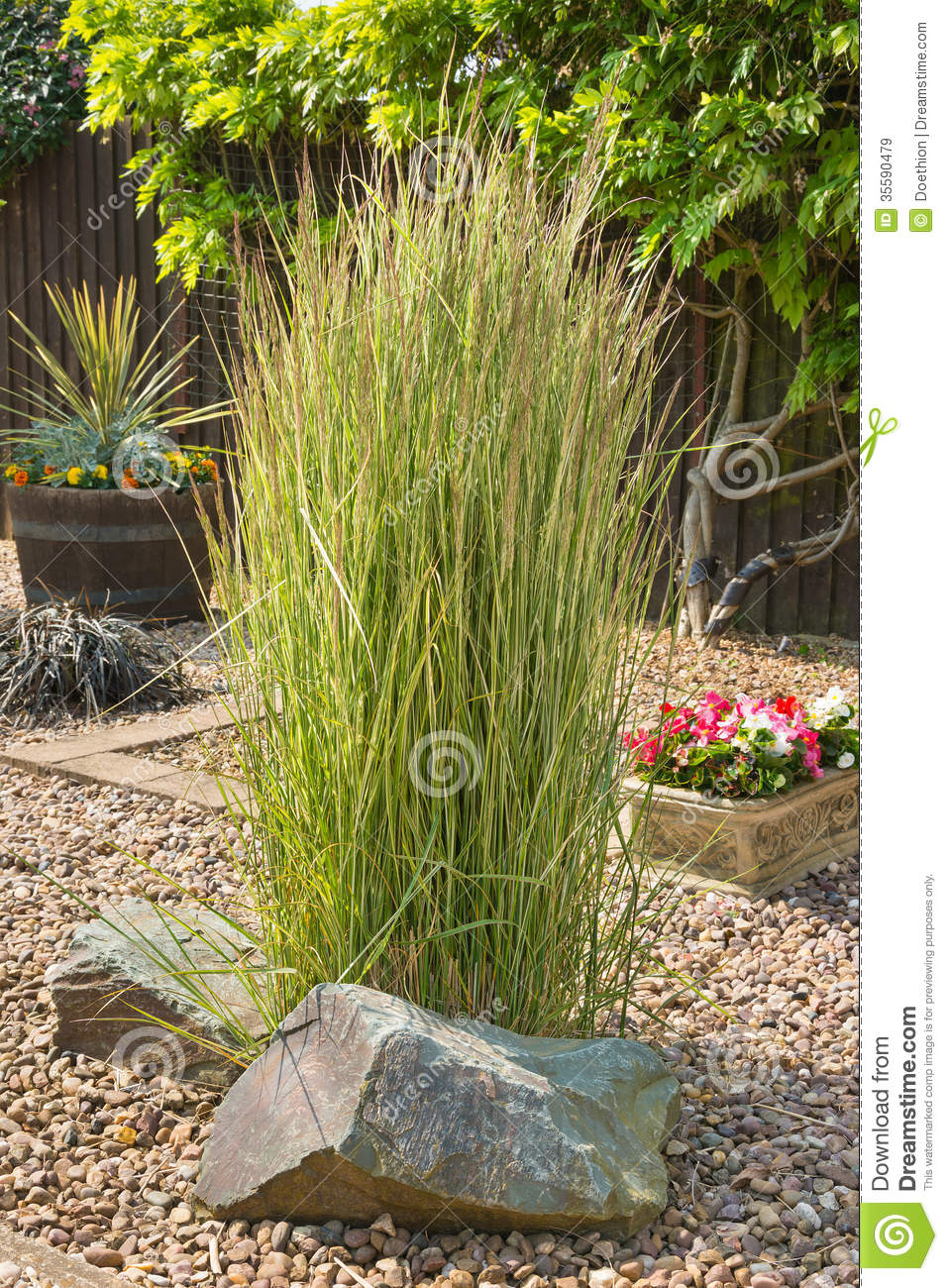 ornamental grass in a gravel bed and rockery royalty free