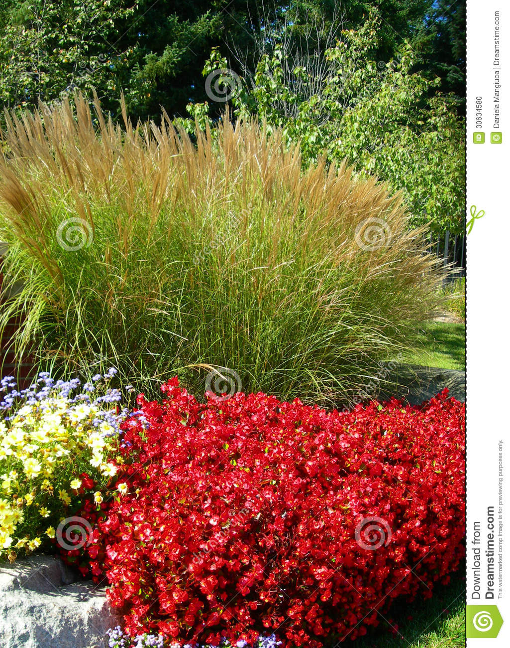 Ornamental green grass and red flower beds stock photo for Grass plants for flower beds