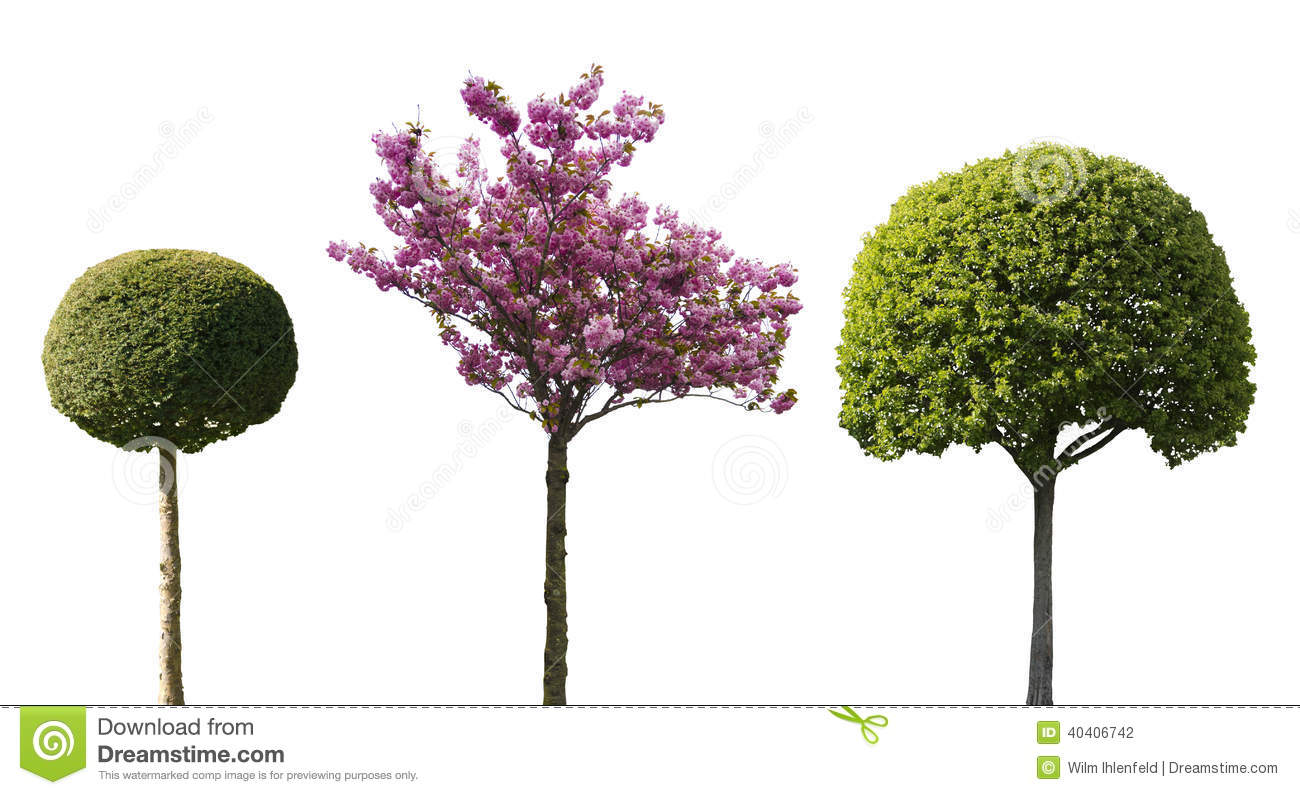 2d trees plan view bing images for Architecture design com