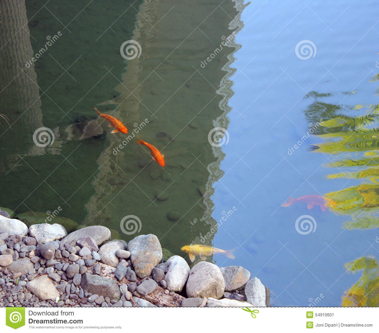 Ornamental koi fish stock photo image 54910601 for Ornamental fish garden ponds