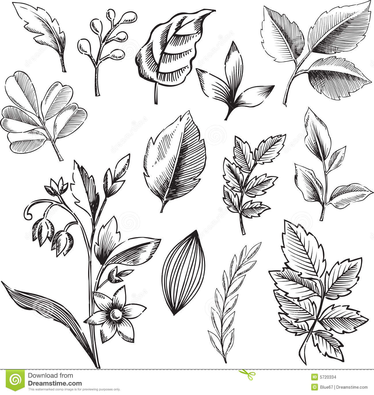 Ornamental Leaves Vector Illustration Stock Vector ...