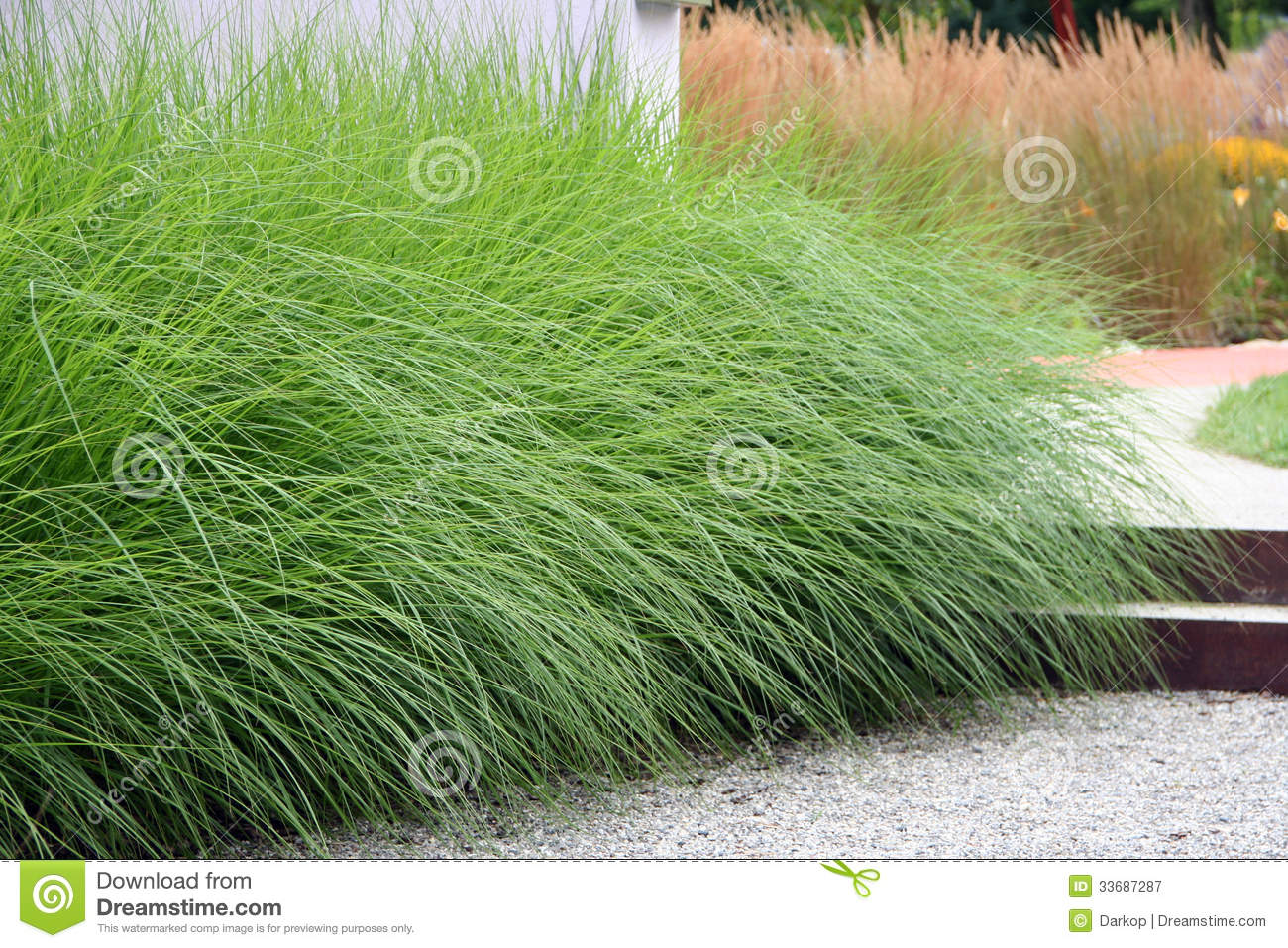 Ornamental perennial grass royalty free stock photography for Ornamental grass design