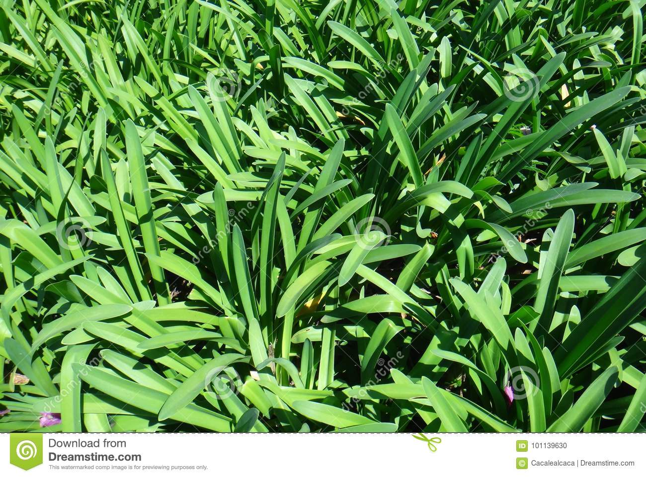 Ornamental Plant Foliage Stock Photo Image Of Flora 101139630