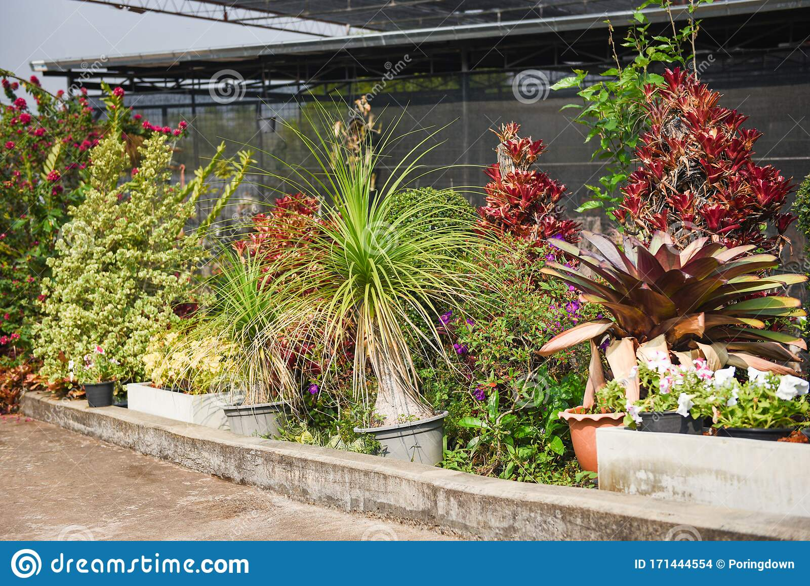 Ornamental Plant Walkway In Home Gardening And Decorating Outdoors Greenhouse Environments Secret Garden And Modern Gardening Stock Photo Image Of Lawn Outdoor 171444554