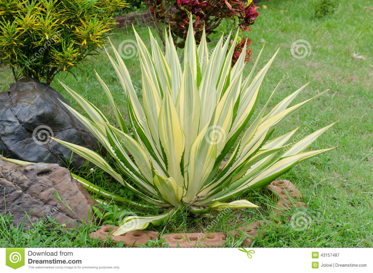 Ornamental plants stock photo image 43157487 for Ornamental garden plants