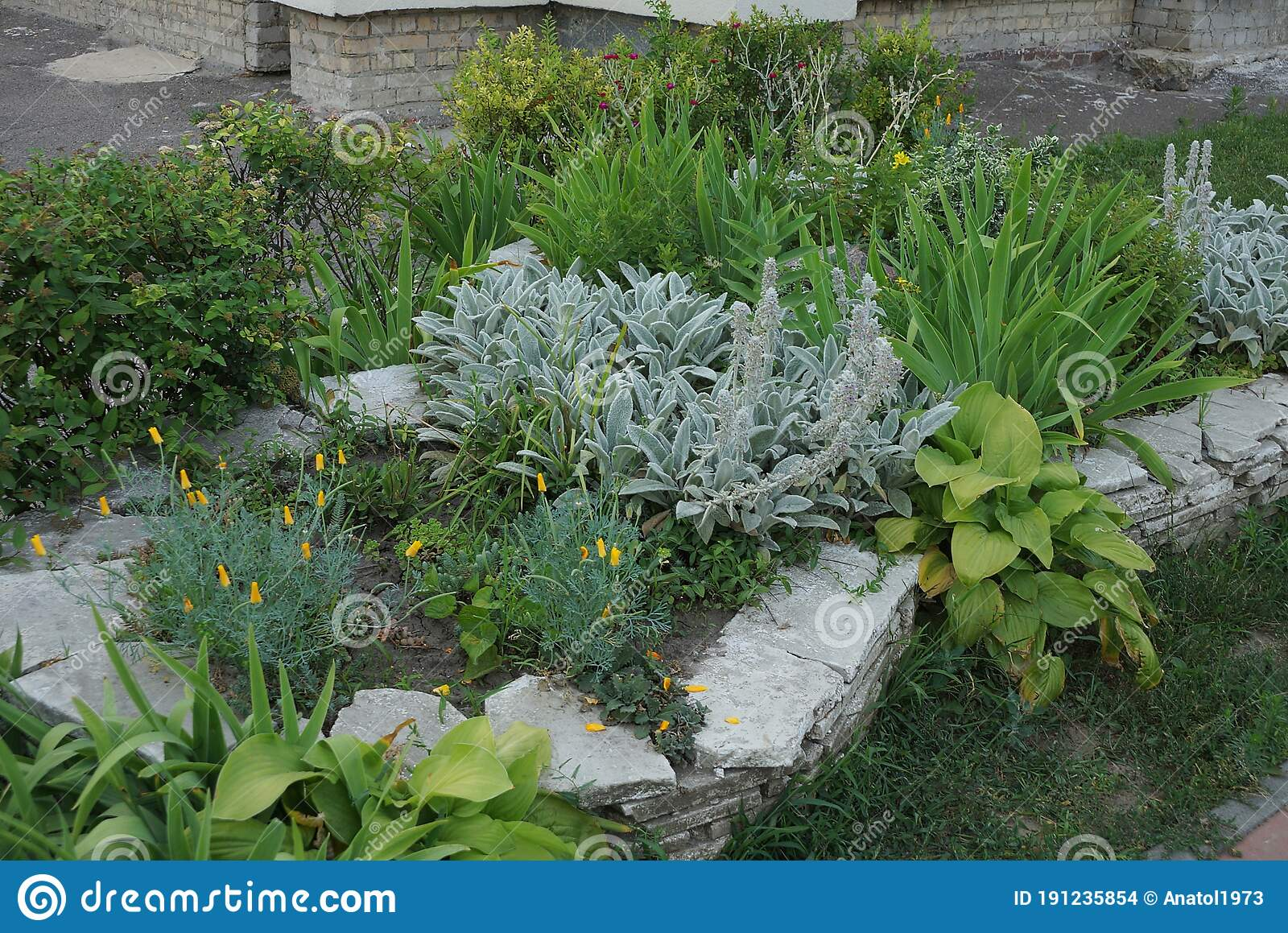 Image of: Ornamental Plants Grass And Flowers On A Flower Bed Stock Photo Image Of Land Garden 191235854