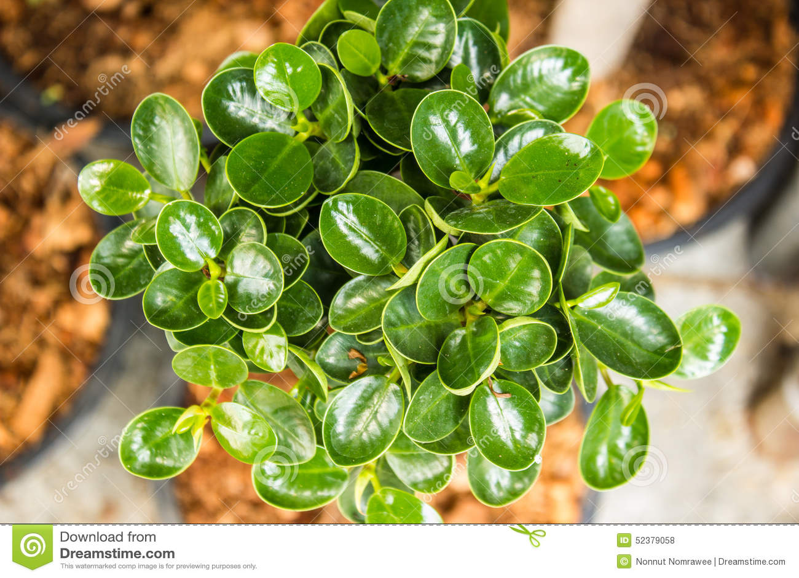Ornamental plants green stock photo image of lush design for Plantas ornamentales