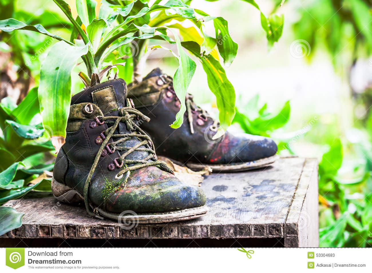 Outdoor ornamental plants - Ornamental Plants On Old Shoes