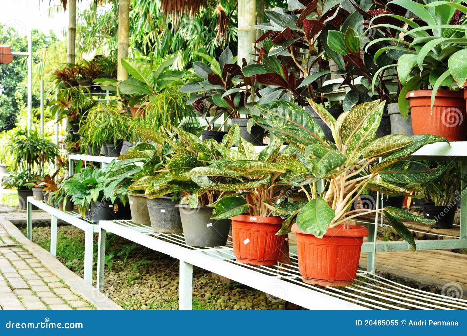 Ornamental plants shop stock image image of trees tree for Design of ornamental plants