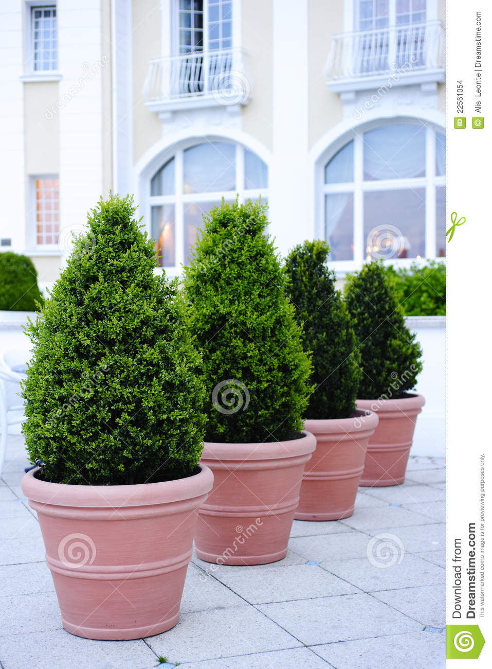 Ornamental Potted Trees Stock Photo Image Of Angled