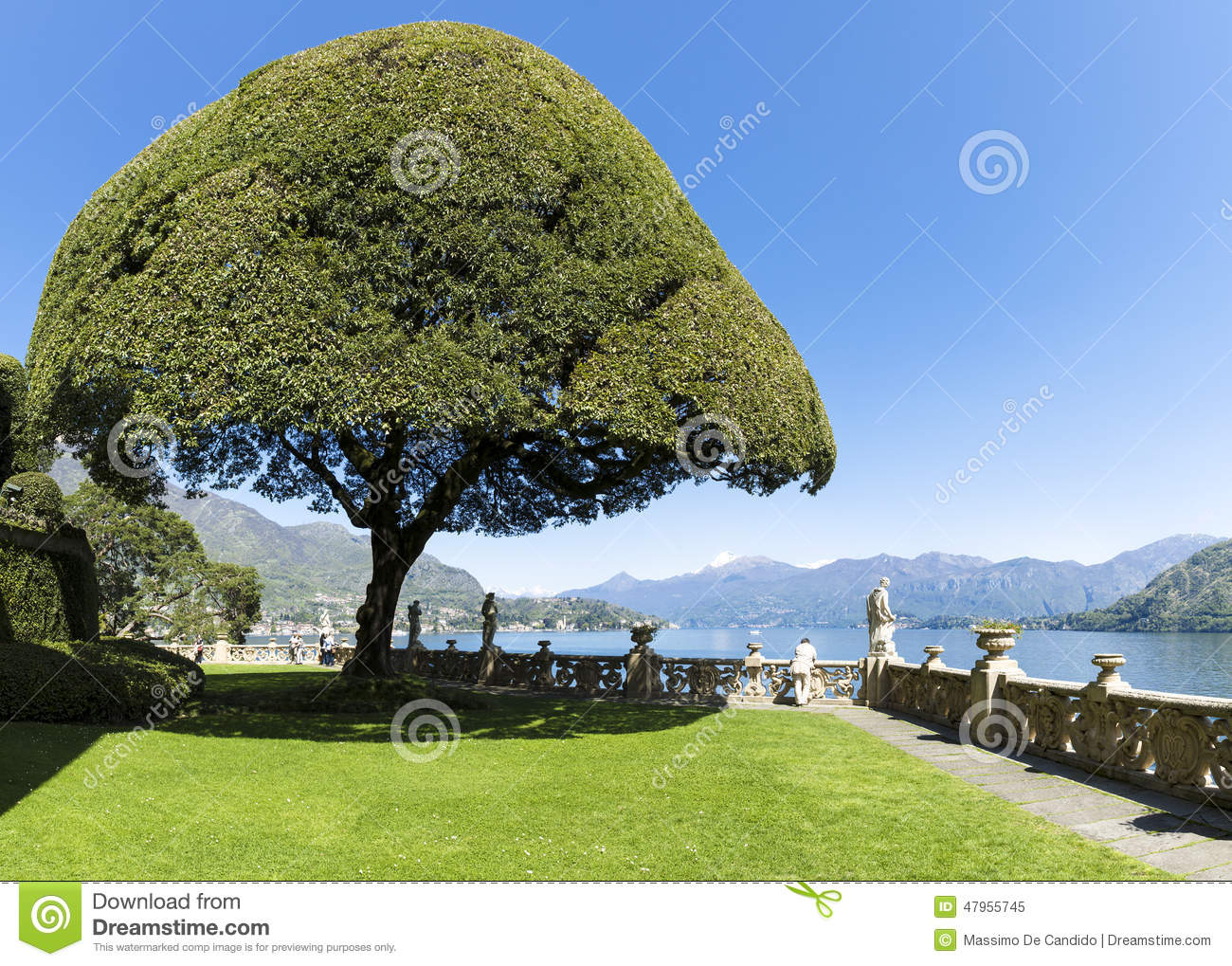 Ornamental tree on the terrace stock photo image 47955745 for Terrace trees
