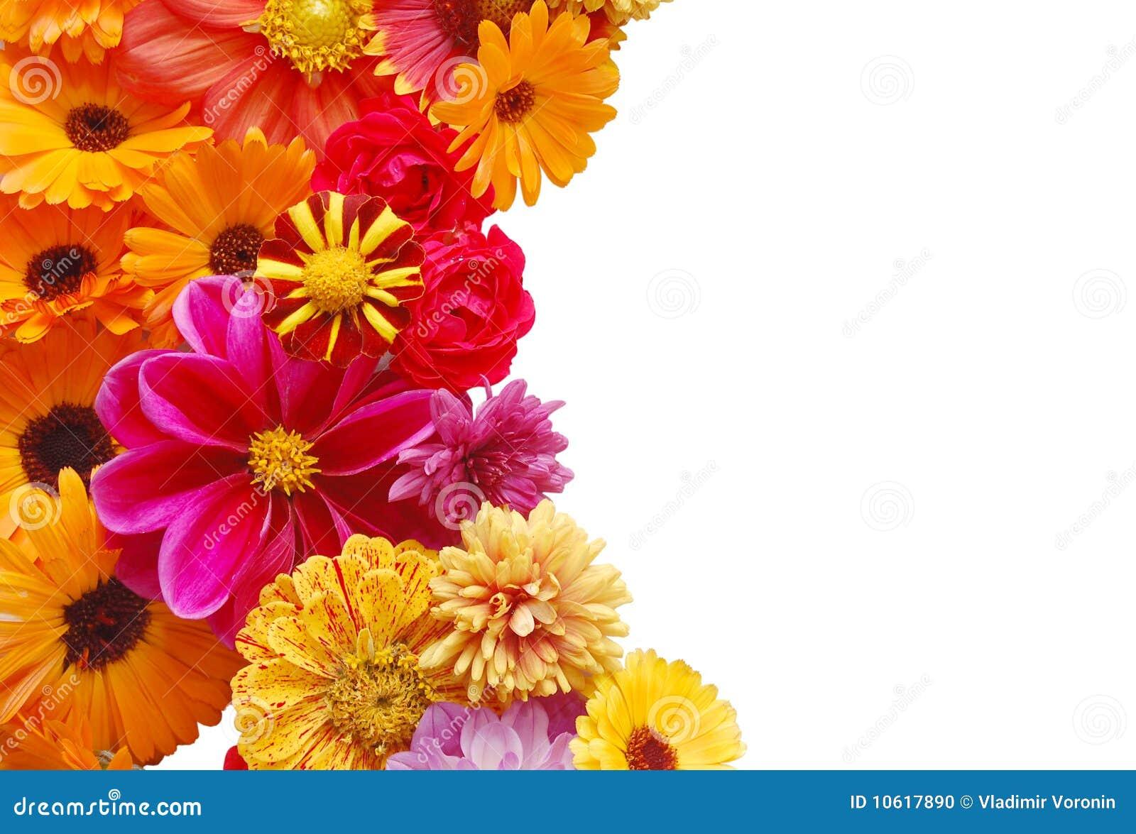 Ornamento de las flores hermosas del verano foto de - Flores de verano ...