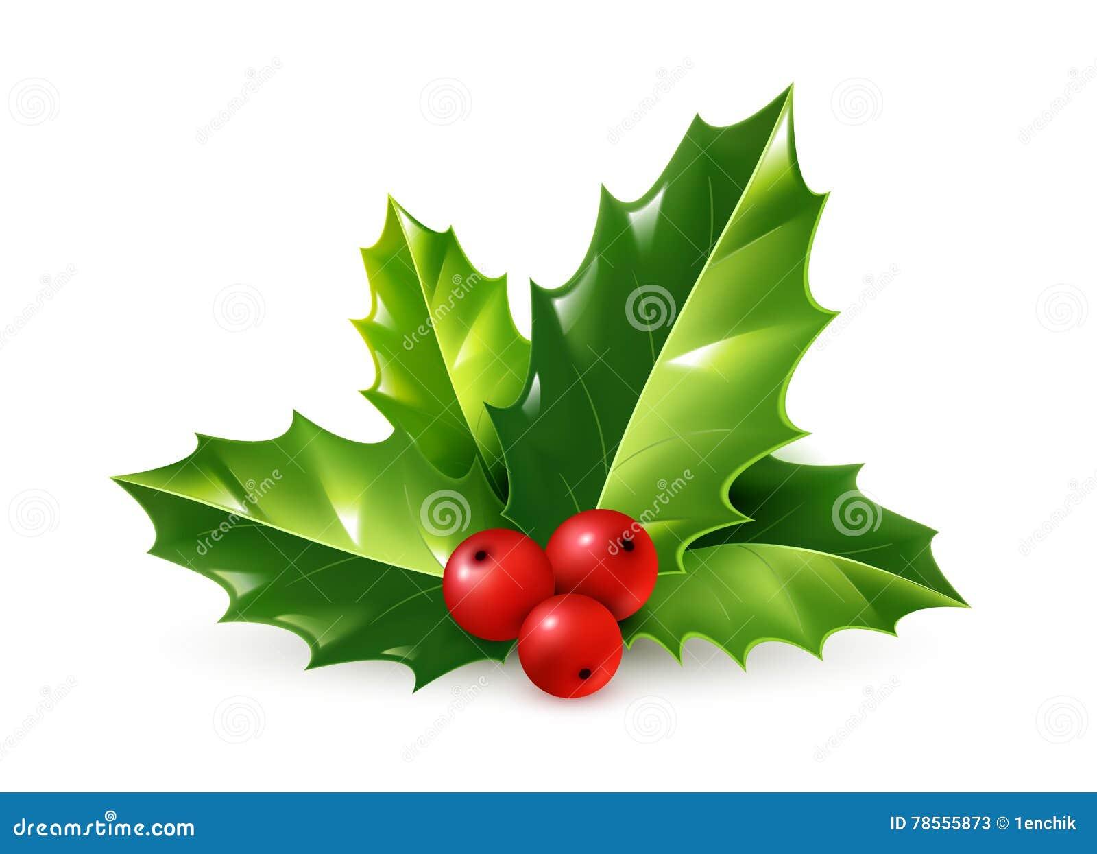 Immagini Agrifoglio Di Natale.Ornamento Realistico Di Natale Dell Agrifoglio Di Vettore