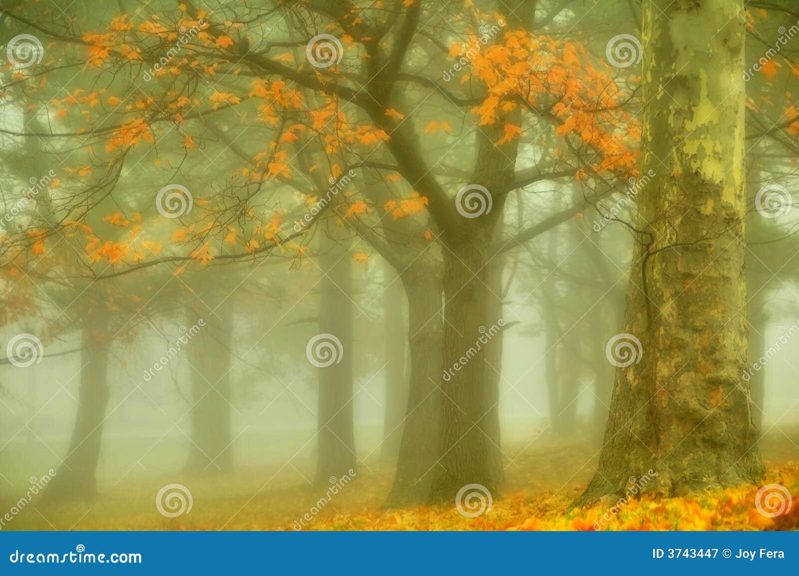 Oro del otoño
