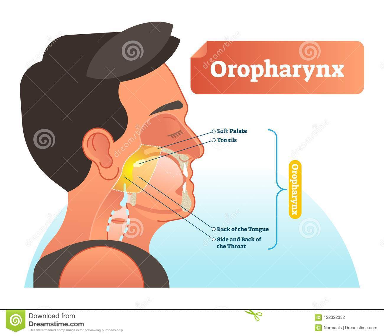 Oropharynx Vector Illustration. Anatomical Labeled Scheme