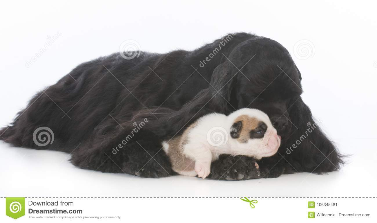 orphaned puppy being raised by surrogate mother