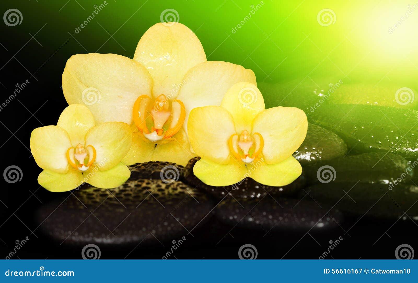 Orquidea De La Flor Y Piedras Negras Imagen De Archivo Imagen De