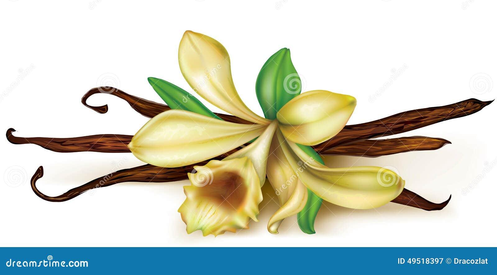 Orquídea de vainilla