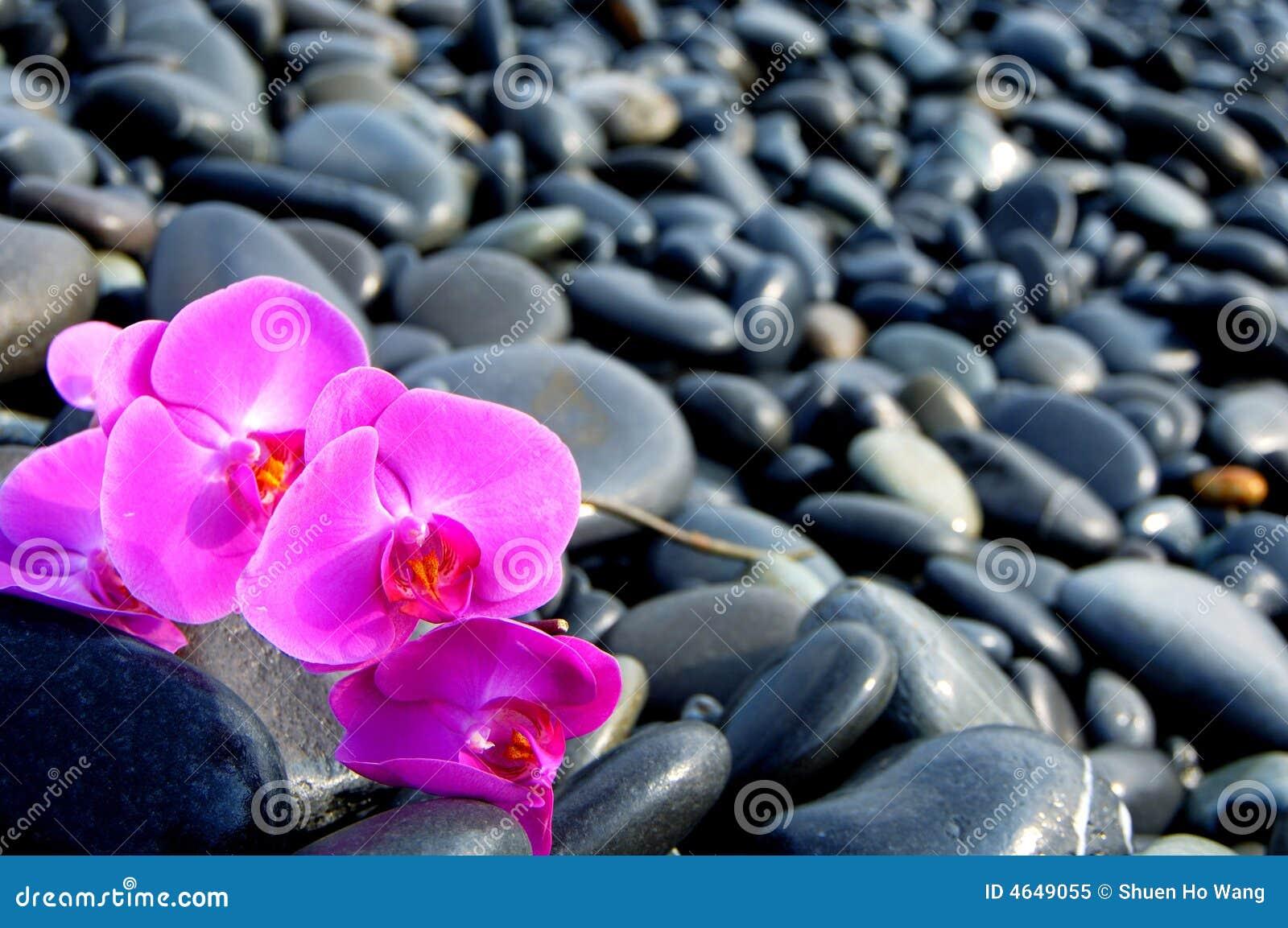 Orquídea e pedra