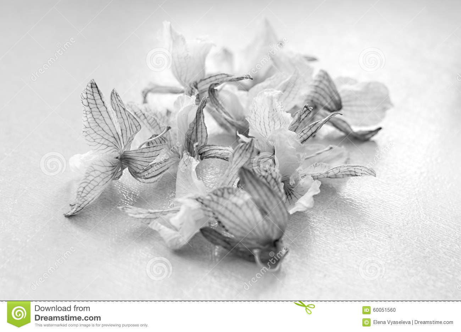 Orquídea muerta