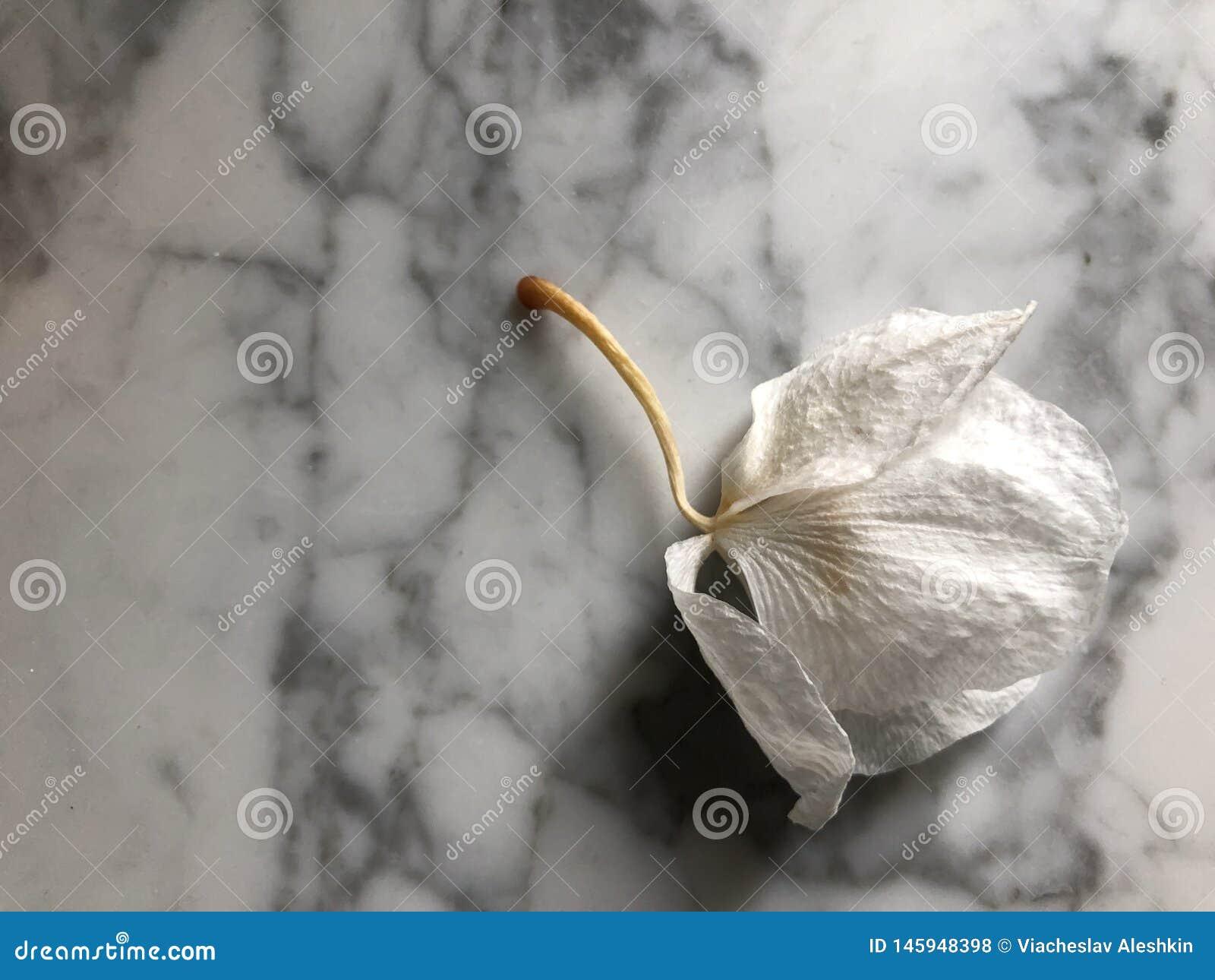 Orquídea murcho bud-05