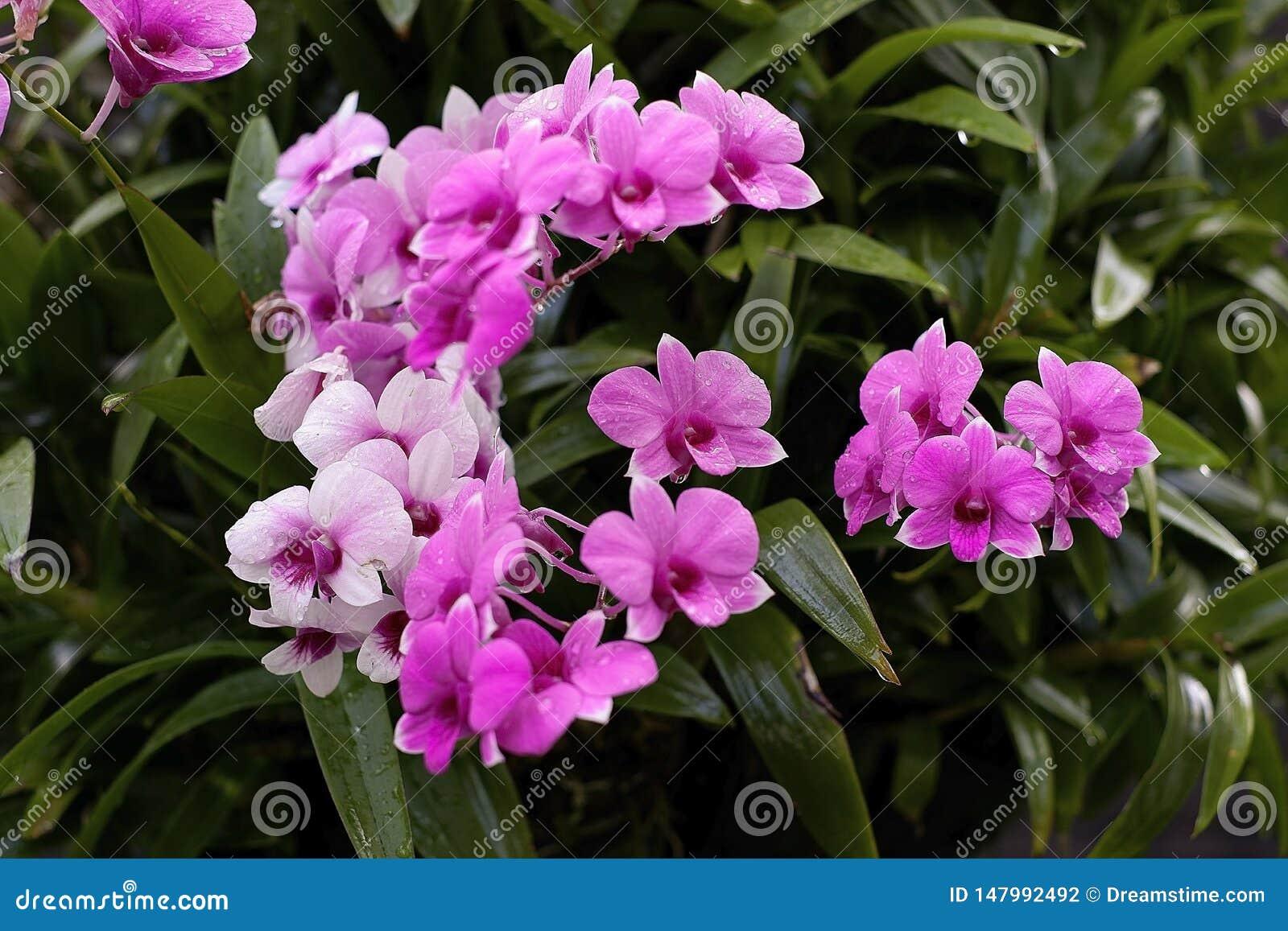 Orquídea, orquídeas, fondo, pinkblossom