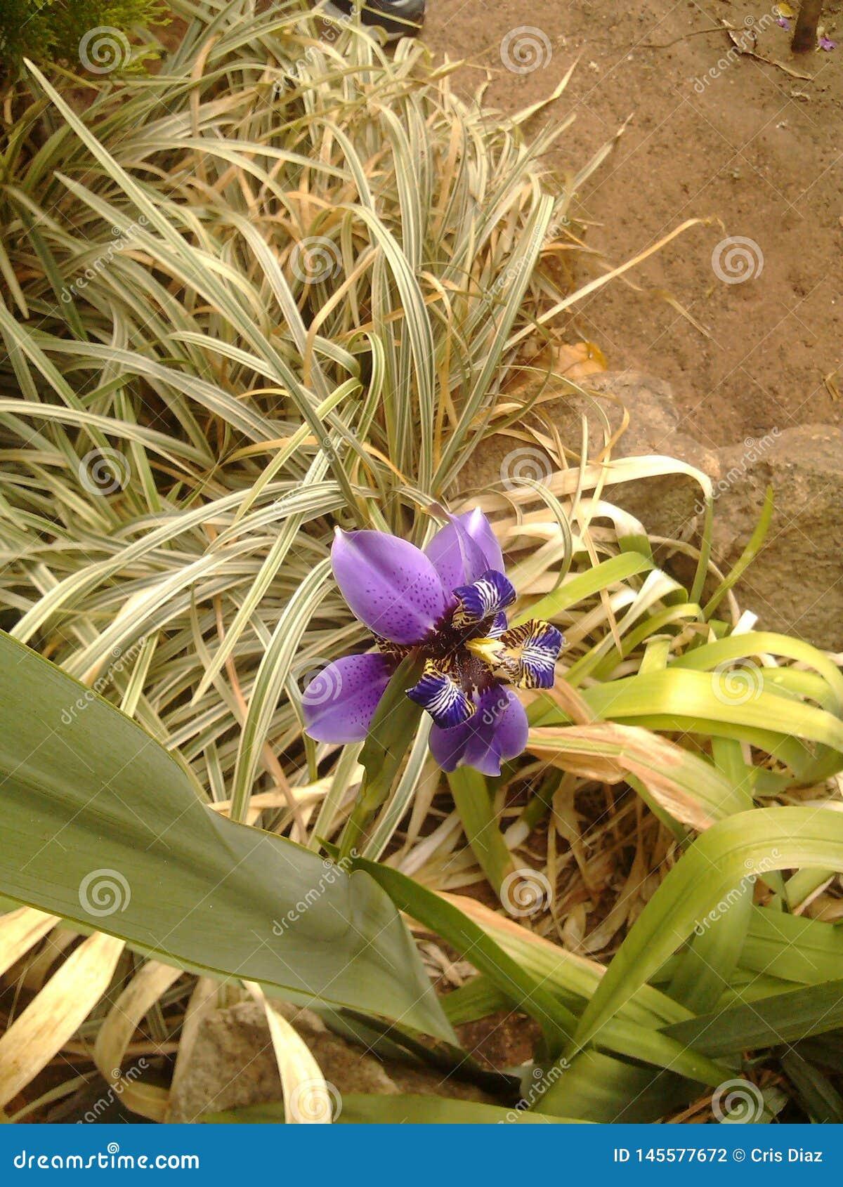 Orquídea roxa do jardim