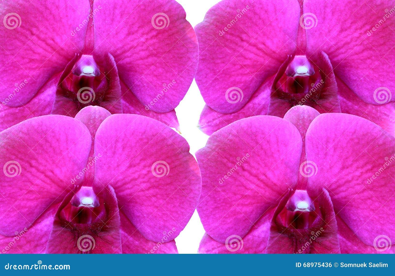 Orquídeas en el fondo blanco