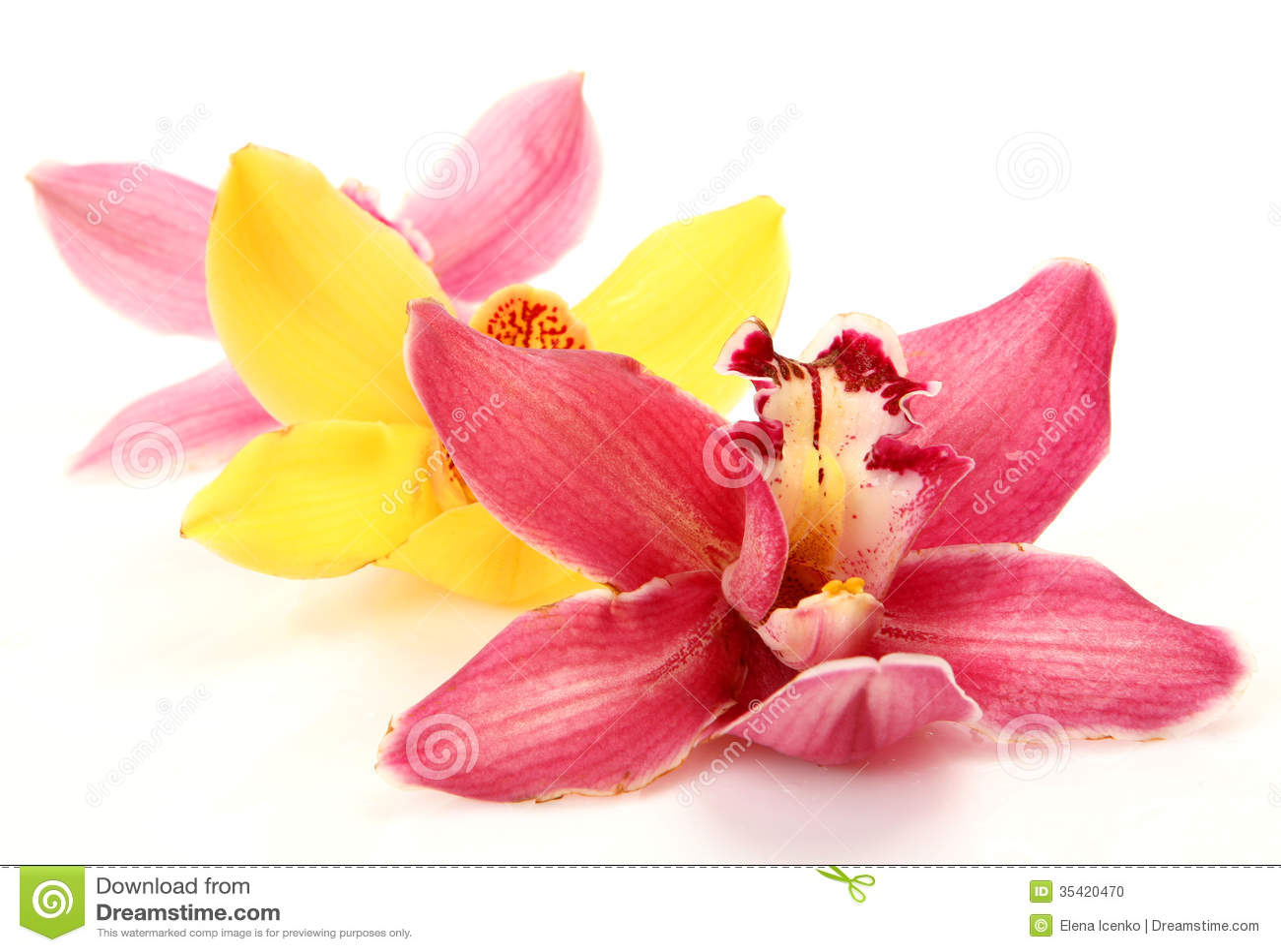 Orquídeas finas